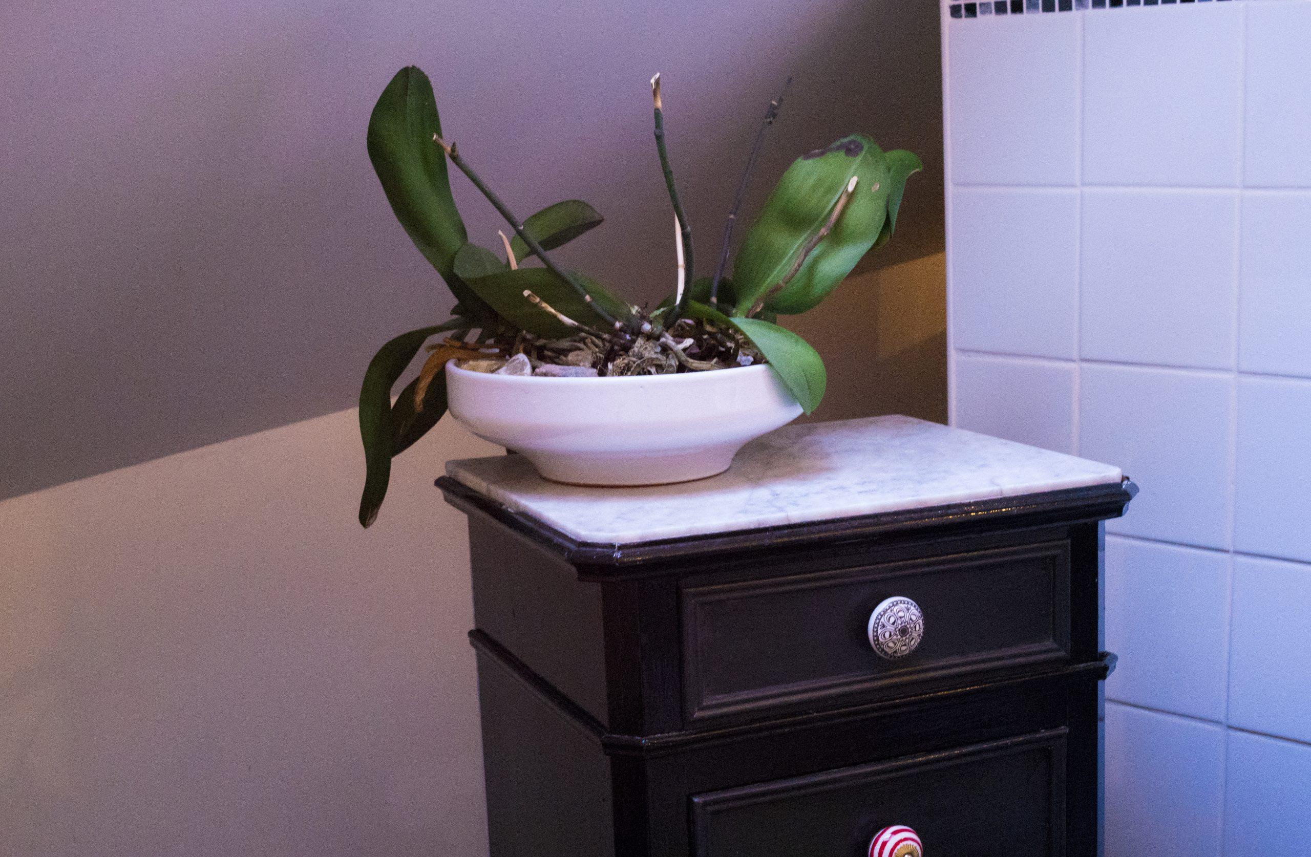 salle eau gite bearn